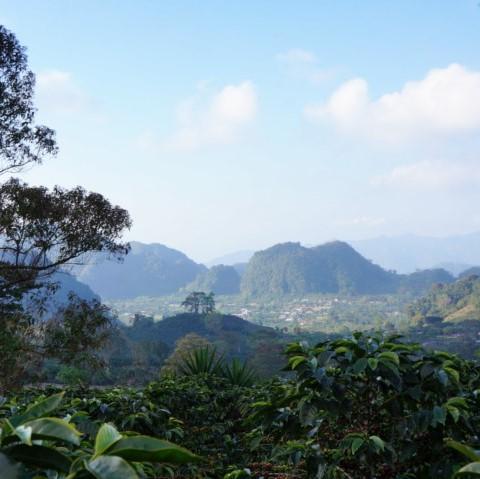 農園周辺の風景