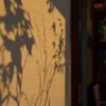 「秋と彩るコーヒー風味」